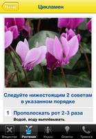 45531 gifwijzer ru planten detail medium 1365639113