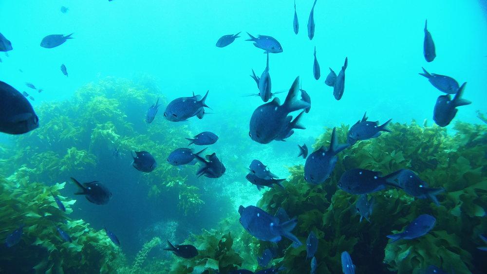 225048 diving 170 0054 8b770d large 1474294012