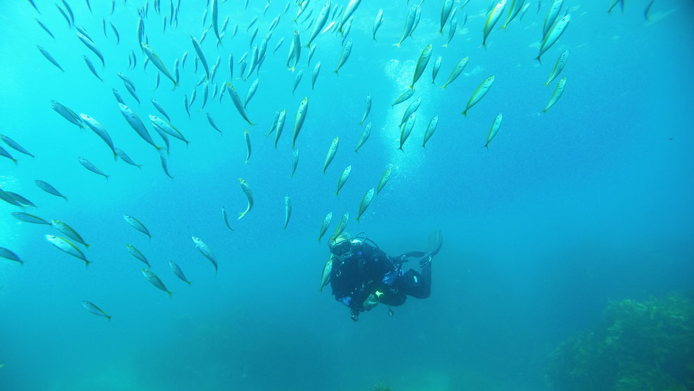 225050 diving 170 0107 e18d2d large 1474294013