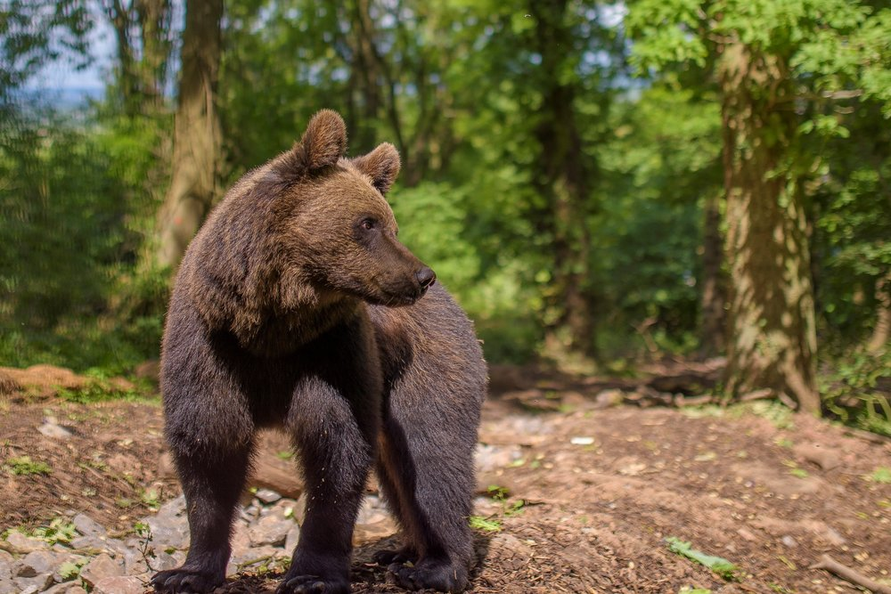396984 albie%20the%20brown%20bear%20at%20bear%20wood%2c%20wild%20place%20project%20%28small%29 5d5246 large 1626346249