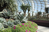 86426 flower dome 4 ga medium 1365655641