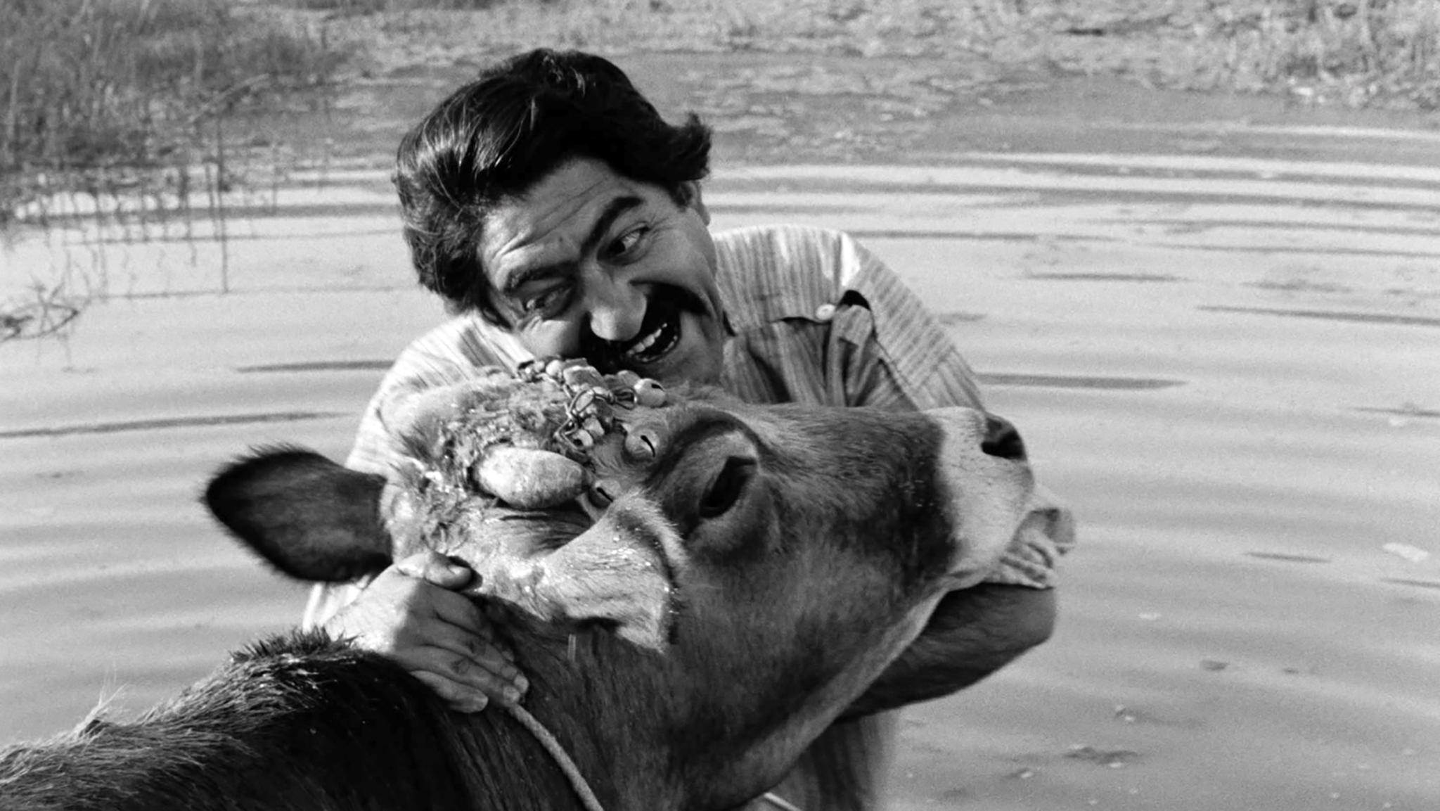 The_Cow_Film_Still_1.jpg