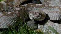 99524 snake1 medium 1367511661