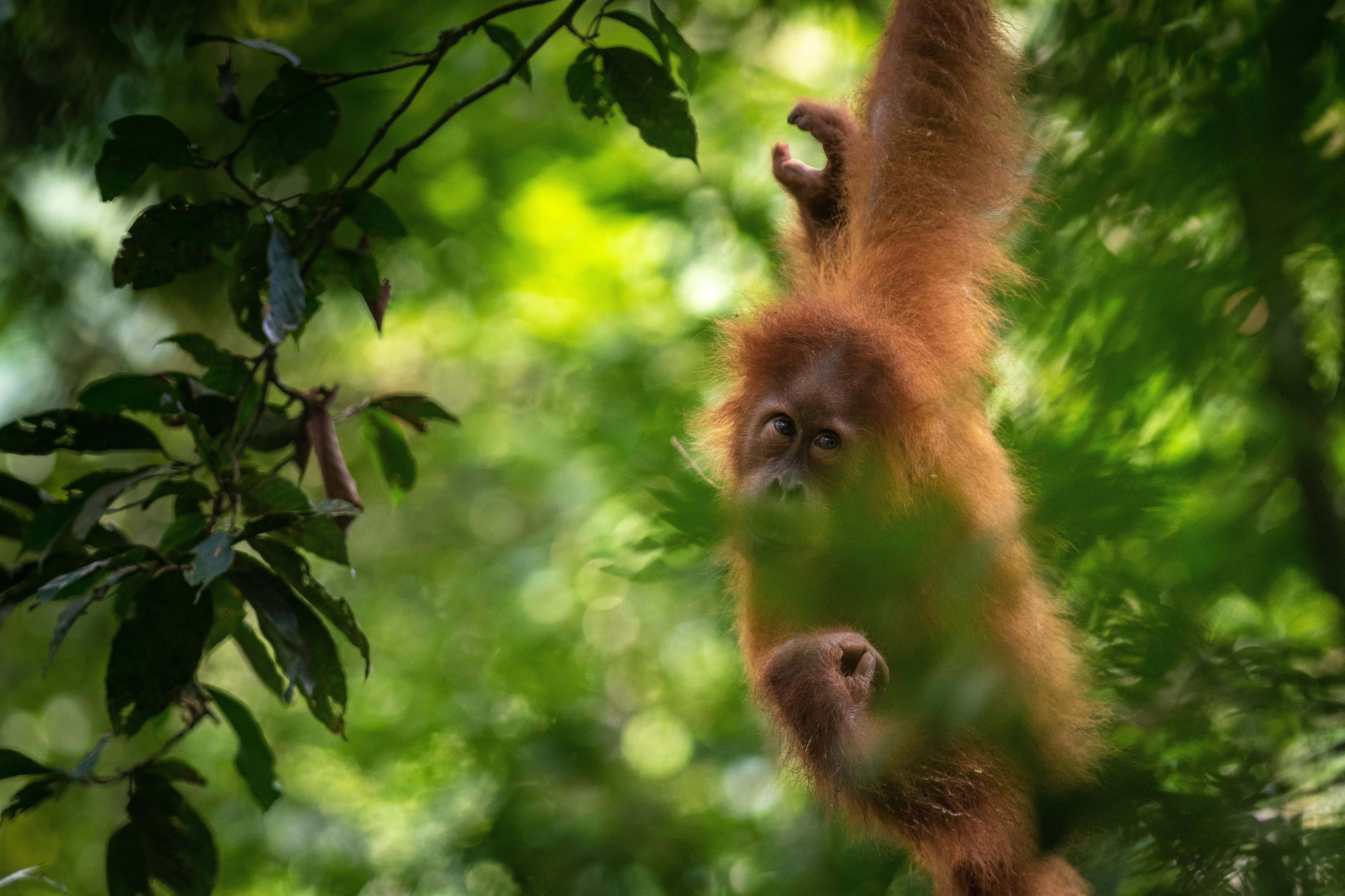 Donor trip-orangutans-024.jpg