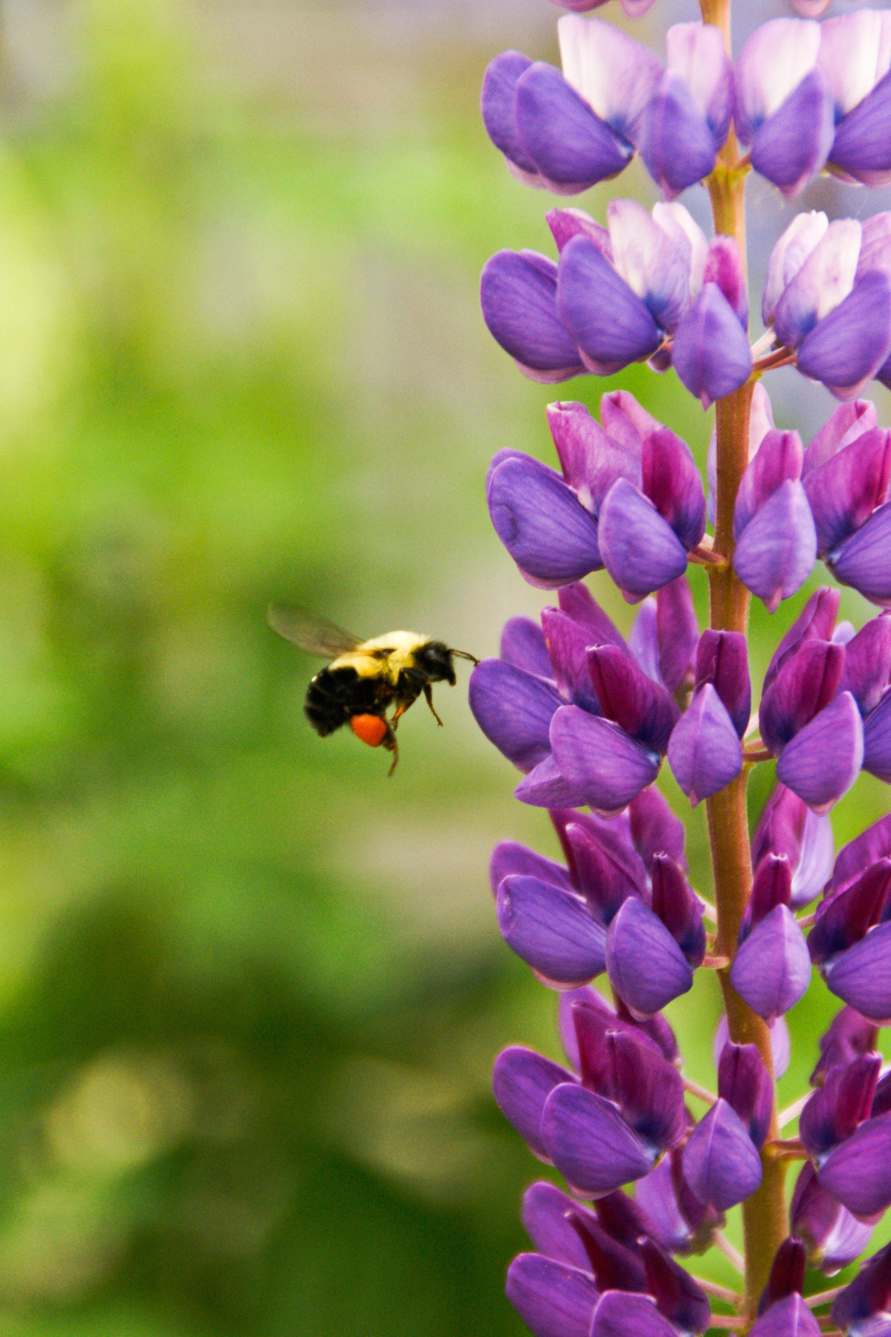 157358 bee%20on%20flower 932b4d original 1424810315
