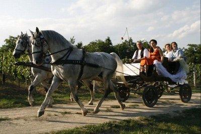 179919 paard 07d73b medium 1442841266