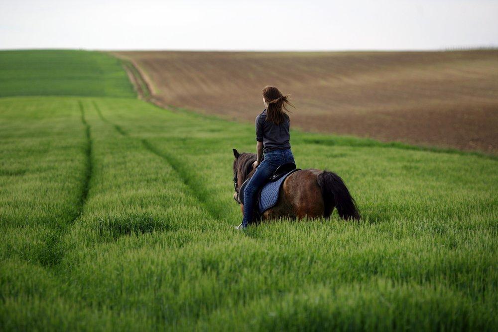 206515 baranja horseback riding optimized for web domagoj blazevic 45aa8d large 1462190613