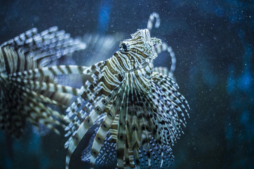 240876 crikvenica aquarium optimiert fuer den druck bojan haron markicevic d1e7c7 large 1490348861