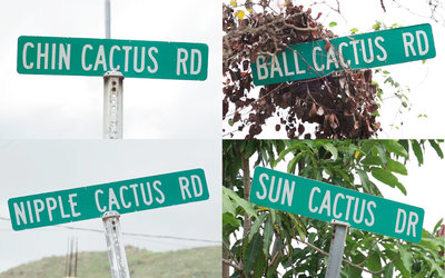 251460 domino%27s image cactusroadsigns 58995b medium 1497959516
