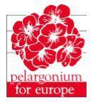 Pelargomium for Europe logo
