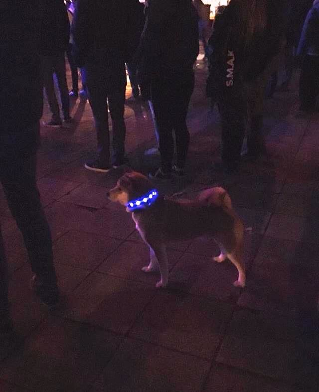 271320 lichtfestival hond 43fb21 large 1517651907