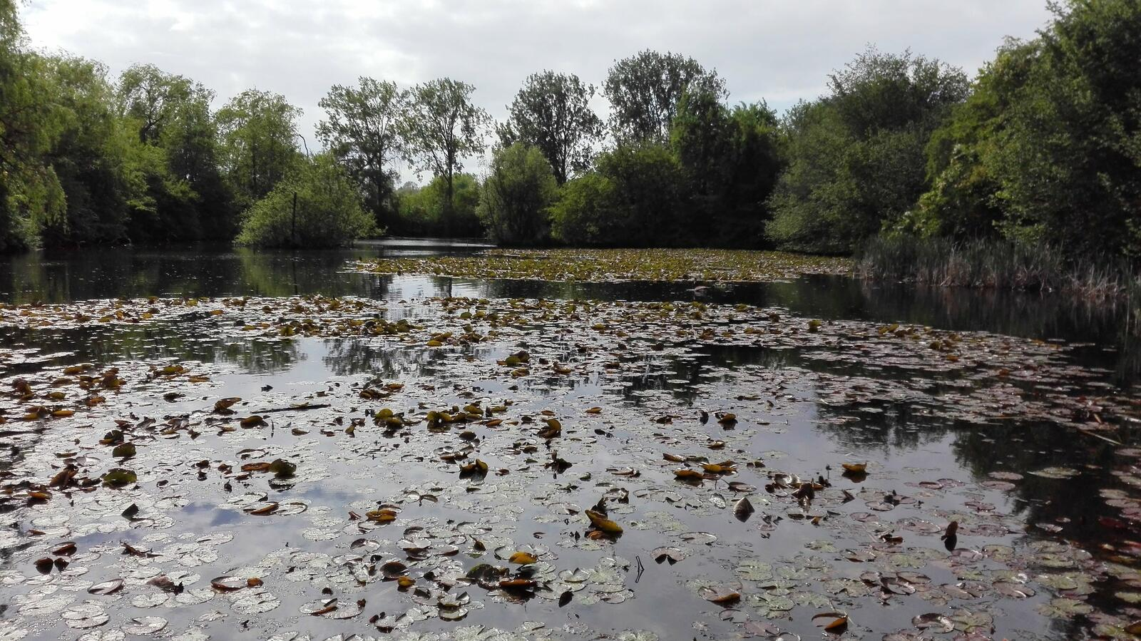 Park Halfweg (1).jpg