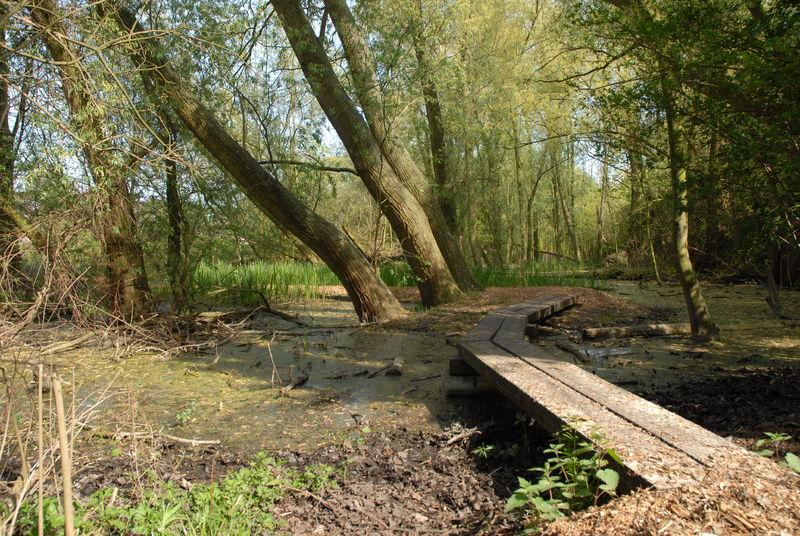 De uitbreiding van het Bloemekenspark krijgt nu definitief een groene bestemming.