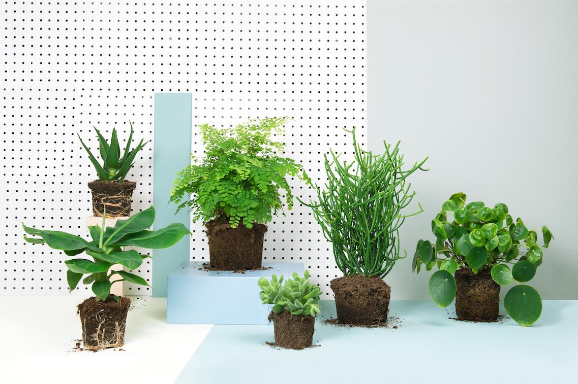 201252 planten in box 9cf7ee original 1459436154