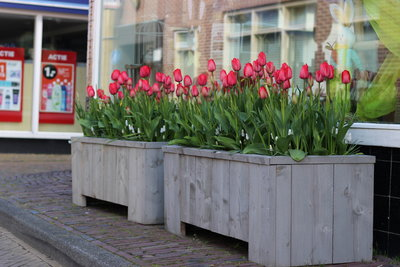 261706 product%20bloemenstorm 2fb1de medium 1508148426
