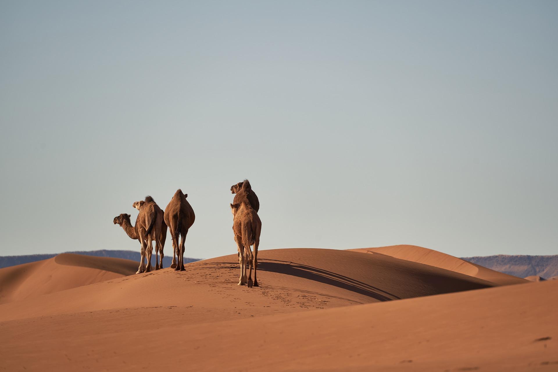 desert-4134934_1920.jpg