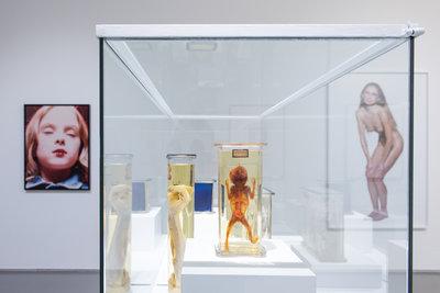 ANIMA MUNDI_Museum_Boijmans_Van_Beuningen_Foto_Lotte_Stekelenburg (4)