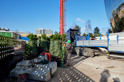 20 extra bomen bovenop Depot. Foto: Aad Hoogendoorn