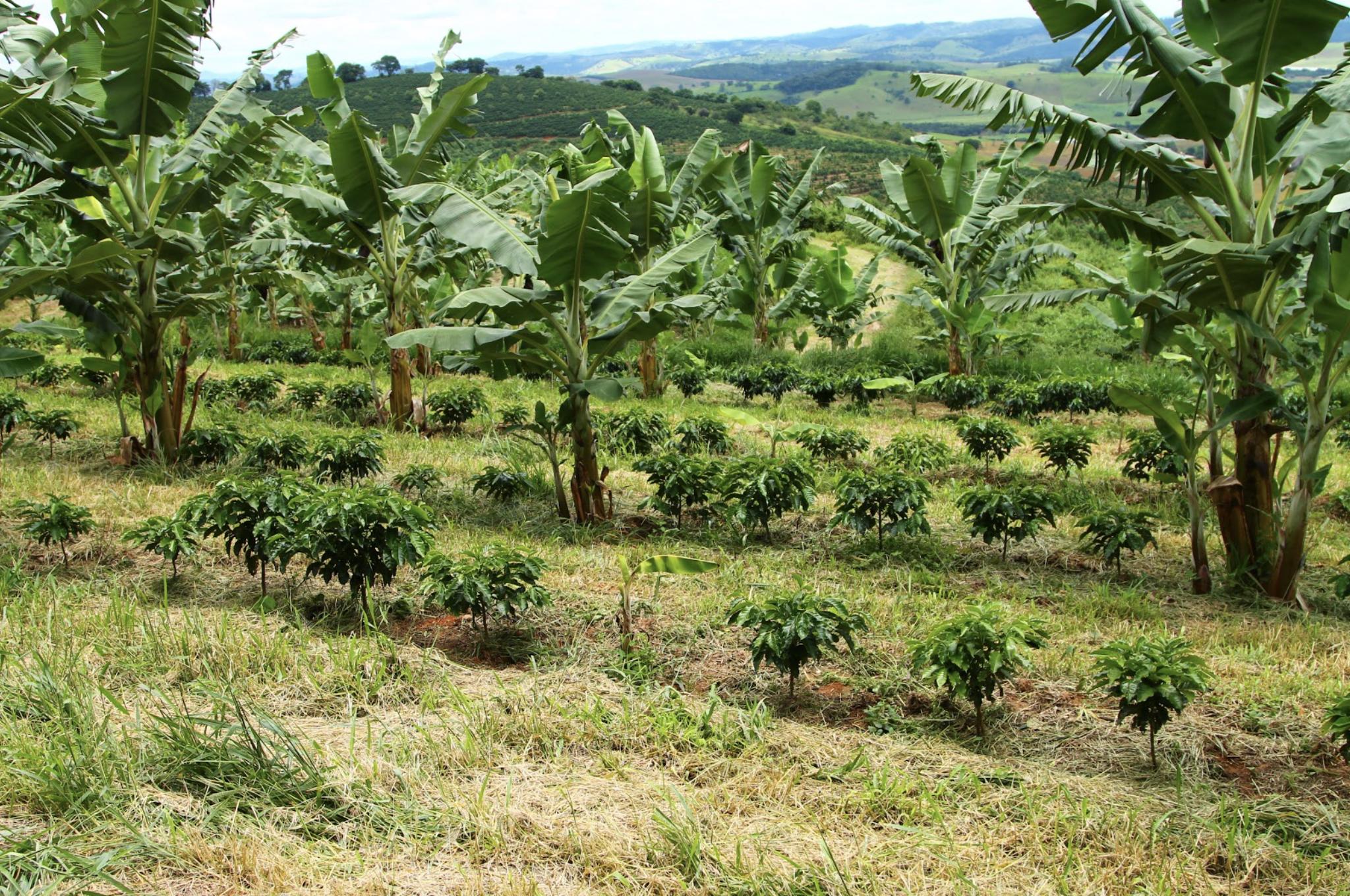 renature-pedra-preta-coffee-minas-gerais-brasil.png