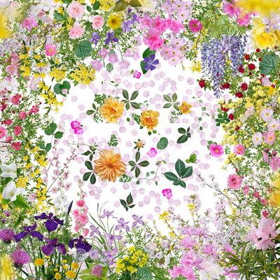 172658 fot.%20katsuhiro%20noguchi,%20flowers%20of%20fukushima 6dabc1 medium 1435930036